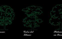 Grupo de: árboles de Europa