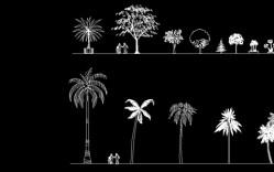 Grupo de: palmeras y otros