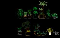 Grupo de: Plantas en maceteros