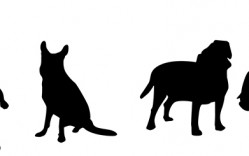 Mascotas en Vector