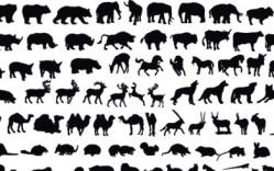 Animales de Zoologico en Vector
