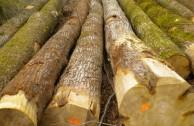 tipos-madera-580x333